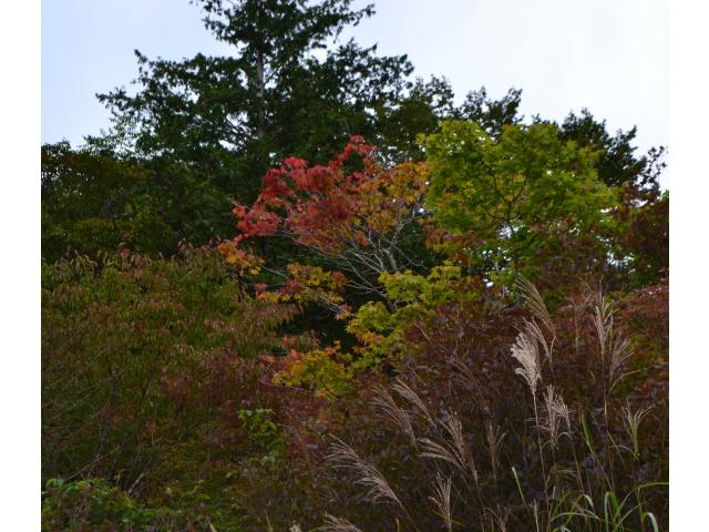 高原に小さい秋が……!