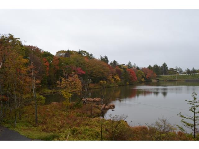 10月23日(木)の紅葉♪