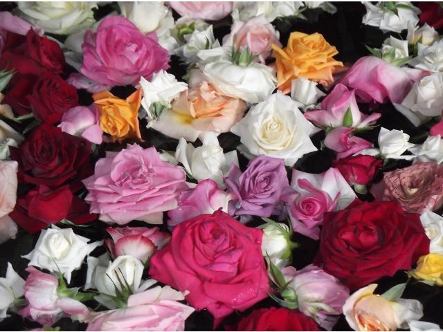 年に一度のバラのお風呂!~パルとよね~
